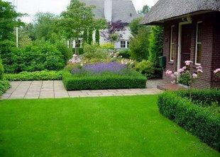 Озеленение участка: постигаем азы