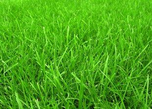 Быстрорастущие газоны: секрет смеси трав