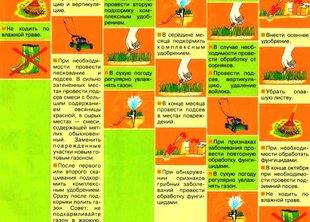 Календарь по уходу за газоном по сезонам