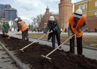 Перекладка газонов в Москве продолжается