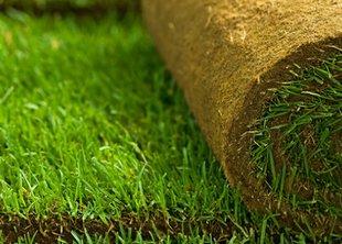 Преимущества рулонных газонов
