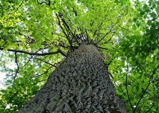 Продолжаются акции за сохранение зеленых насаждений в городе
