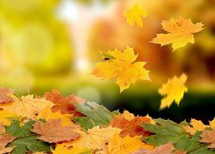 С первым днём осени!