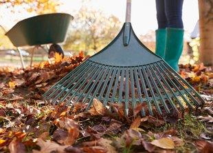 Садовники города готовятся к 1 сентября