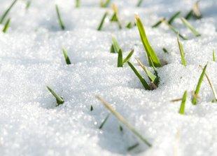 Весенняя подготовка газона
