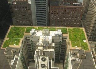 Зеленые крыши: новый тренд на рынке газонов